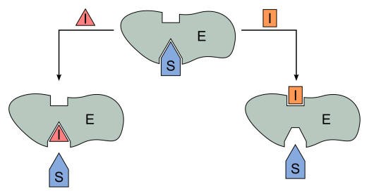 2000px-Binding_sites_enzyme_inhibitors.svg.png