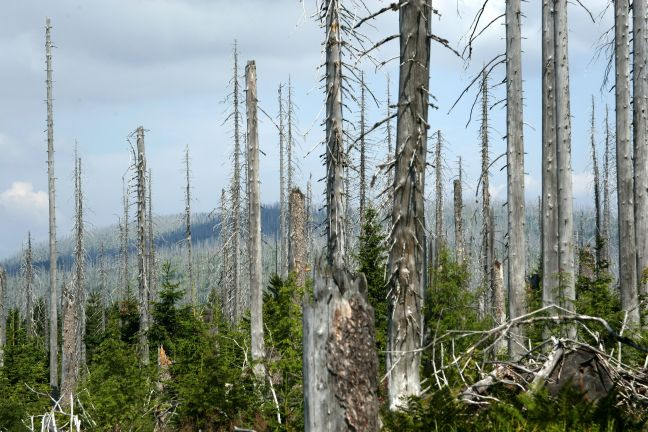 trees-killed-by-acid-rain-56c8e0273df78cfb378c4aee.jpg