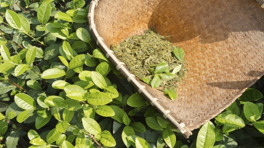 green-tea-leaves-image-sep-2015-enews.jpg